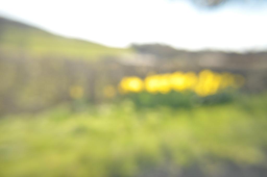 daffodil blur