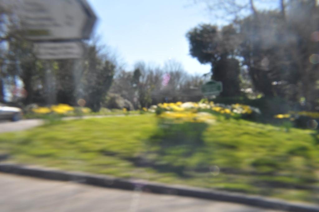 daffodil blur2