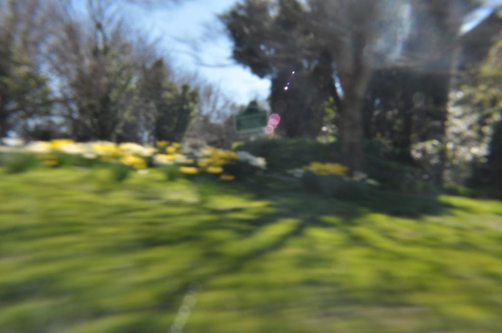 daffodil blur3