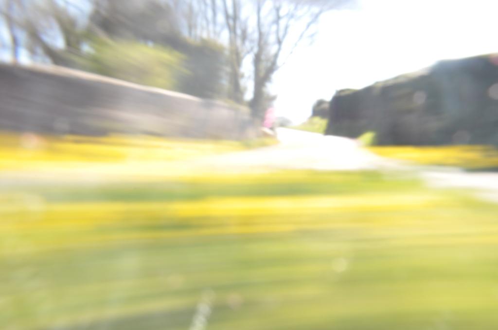 daffodil drag